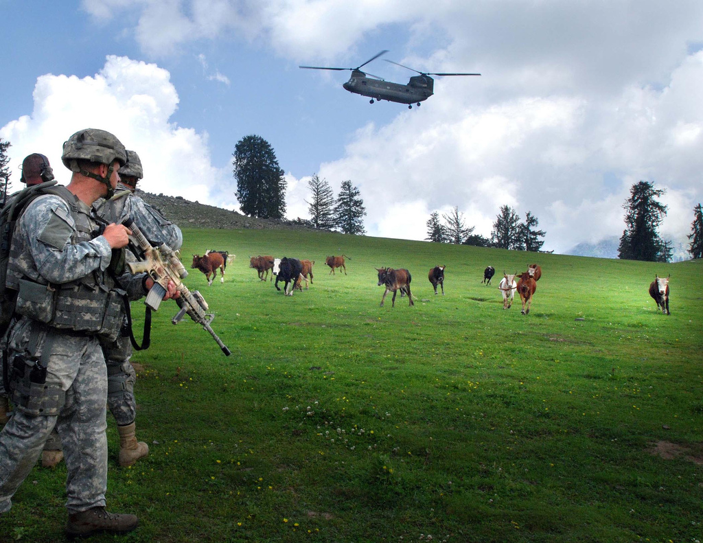 U.S. soldier watches cattle run while a CH-47 helicopter prepares to land, near Forward Operating Base Naray, Afghanistan, 2006. (U.S. Army)
