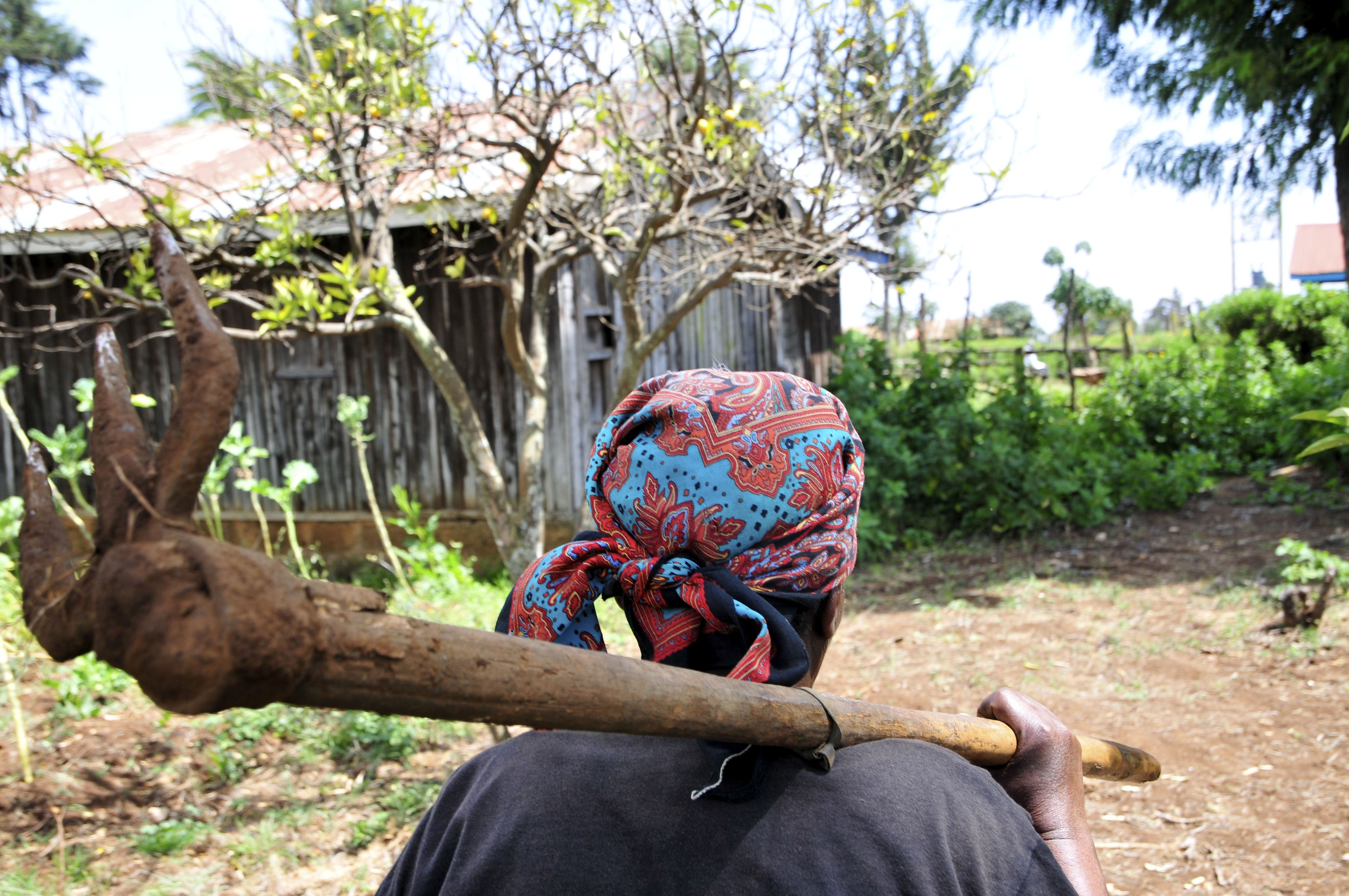 Farmer in the Mount Kenya region. (Neil Palmer with CIAT via Flickr)