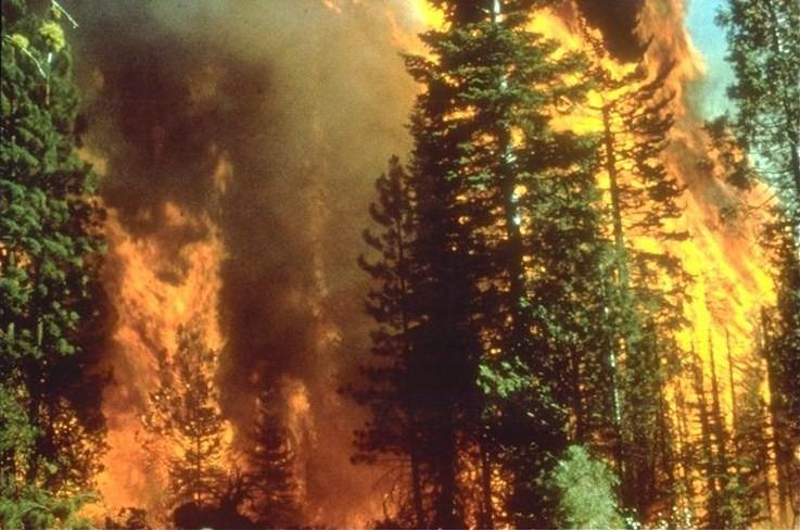 California wildfire. (Wikimedia)